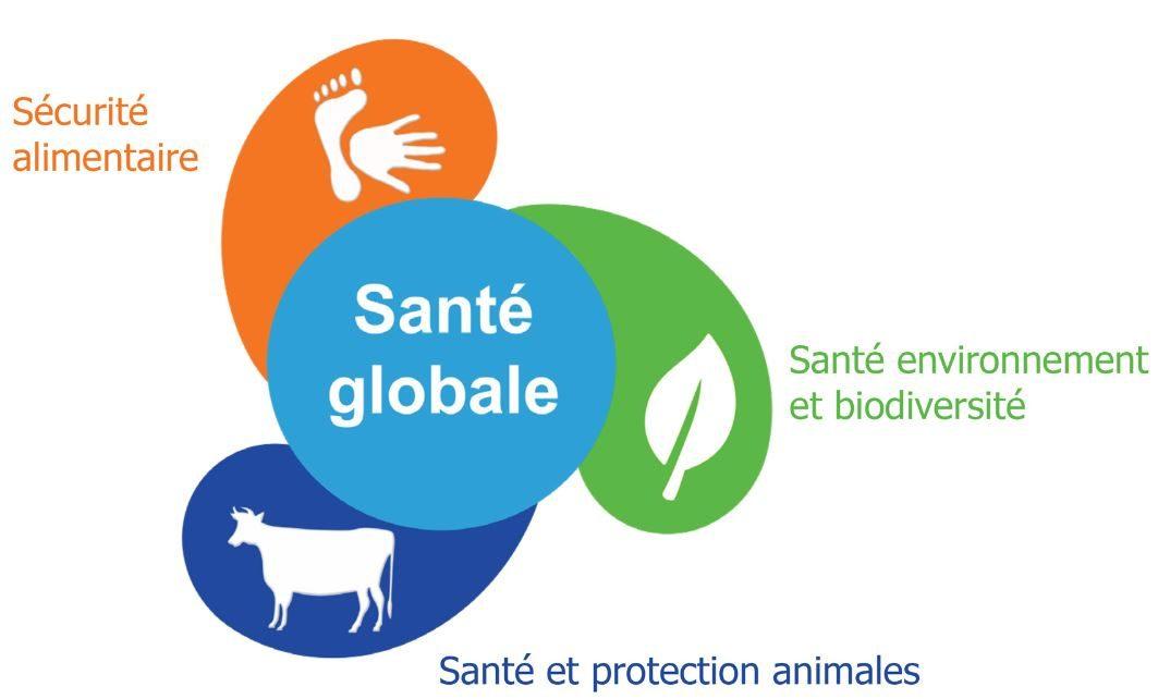 Logo une seule santé